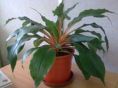Dieci piante anti inquinamento