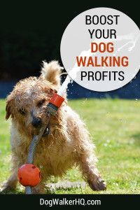 Boost Profits from Your Dog Walking Service Now! More