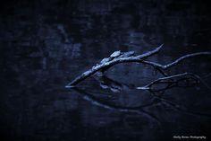 Blue Night - Shelly Boren Photography