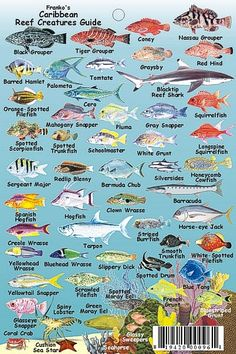 Caribbean Reef Chart