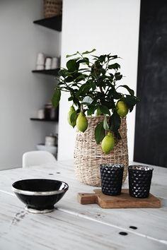 Lime tree from Ikea /Helt enkelt