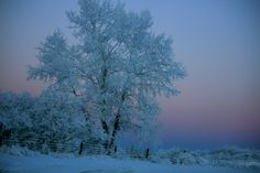 Beautiful frosty morning in Fort St. John, B. Photo taken by a Northern Health staff member. We Northern B. Raising Boys, British Columbia, Clouds, Health, Sweet, Travel, Outdoor, Beautiful, Nature