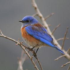 Lonesome bird