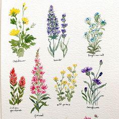 Pretty Little Wildflowers Simple Flower Drawing, Easy Flower Drawings, Easy Flower Painting, Flower Painting Canvas, Flower Art, Flower Garden Drawing, Flower Paintings, Botanical Drawings, Botanical Art
