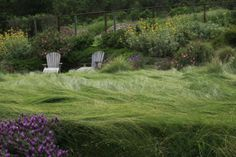 California native grasses in a Northern CA garden around Moraga