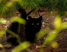 Hiding in the Garden - Pixdaus