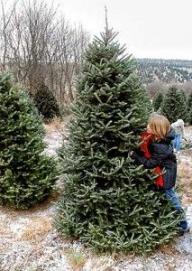 Repurposing Your Live Christmas Tree After the Holiday by Joe Lamp'l