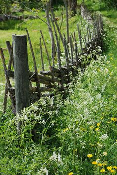 Natural fence, Bullerbyn