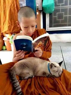 Animals For Kids, Animals And Pets, Baby Animals, Funny Animals, Cute Animals, Cat People, All About Cats, Kids Reading, I Love Cats