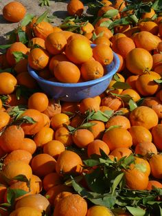 oranges for sale at the souq, Morocco