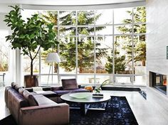 fiddle leaf fig in front of window.