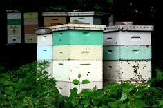 "The Secret to the Modern Beehive is a One-Centimeter Air Gap Beekeeping dates back to ancient Egypt. But in 1851, a Massachusetts minister changed the game by inventing a new hive. His secret? Something called ""bee space"""