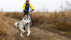 Taking your dog along for a bike ride is a great way for both of you to get exercise. Here are tips to make sure it s a safe and fun excursion.