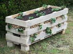 Follow the pin to see Instructions  Grow your own Strawberries with this simple planter that requires a single Pallet!  What could be better than having your own fresh strawberries and the whole family can watch their progress.  There really is a certain satisfaction in getting your green thumb on and this project is perfect for beginners.