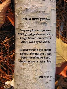 Into a New Year, by Peter Finch