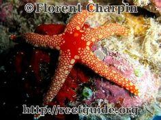 sea stars have no brains or blood.. pretty amazing!!