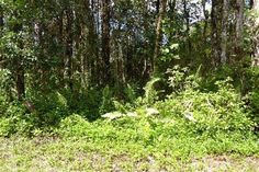 14-3551 Hilo Rd , Nanawale Estates Subdivision  Hawaii Information Service Property Search