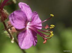Little pink beauty / Clickasnap Bokeh, My Photos, Pink, Beauty, Beauty Illustration, Roses, Boquet