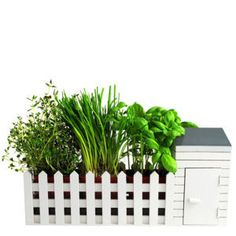 Indoor Allotment with Assorted Seeds  £24.99