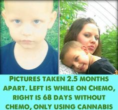 Mom Saves Her Son From Cancer by Choosing Cannabis Over Chemotherapy (Video)