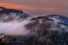 Fog by MartinSprusansky. Please Like http://fb.me/go4photos and Follow @go4fotos Thank You. :-)