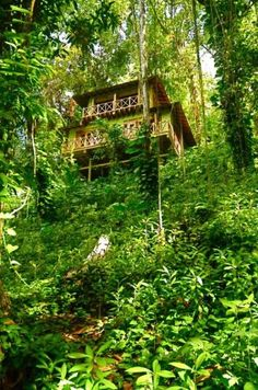 Kanopi House - Treehouse hotel in Jamaica, in the jungle by the Blue Lagoon