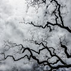 gnarly tree branches