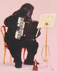 Nan says: I think this guy used to play in Mr. Nelson's Accordion Band with me.