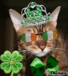 Irish Kitty