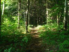 Southbelt Hike & Bike Trail - a six mile trail I like to walk.