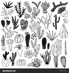 Black And White Hand Drawn Cactus And Succulents. Vector Set With Succulents Flowers, Concrete Pots And Glass Terrariums. Vector Illustration. - 383507794 : Shutterstock