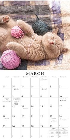 Tuckered out! Buy your 2018 Cat Naps calendar from Purrfect Gifts Online today! Cat Naps, Cat Calendar, Online Gifts, Cats, Board, Stuff To Buy, Gatos, Kitty Cats, Cat Breeds