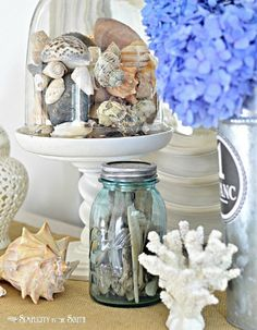 31 Seashell Collection Display Ideas - Completely Coastal