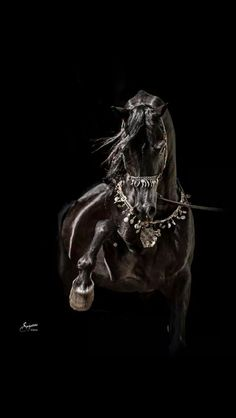 Beautiful Black Beauty horse pawing at the air. Gorgeous decorated bridle and chest strap. Nice horse photograhy. Please also visit www.JustForYouPropheticArt.com for colorful inspirational Art. Thank you so much! Blessings!