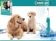 Ultrahangos fogkefe állatoknak - Egészség kupon