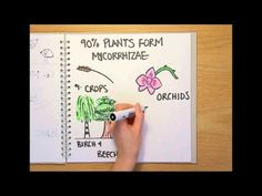 Fungi are a biologically important, and often overlooked Kingdom of organisms. In this Naked Science Scrapbook we find out what a fungus actually is, how the. Science Videos, Easy Science, Life Science, Science And Nature, 7th Grade Science, Middle School Science, Technology Lessons, Science And Technology, What Is Fungi