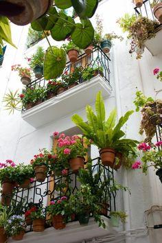 les plus beaux fleurs pour le balcon fleuri, terrasse avec beaucoup de fleurs