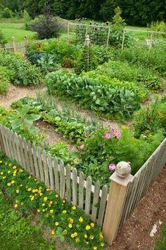 柵の周りに花を植えてもいいですね!マリーゴールドなら防虫効果も♪また、野菜の収穫後など、見栄えのしない時期も華やかにしてくれます。