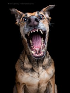"Photograph ""Ooh, my Dooog!!"" by Elke Vogelsang on 500px"