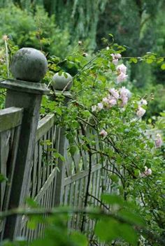 .climbing roses on an old iron fence....could it get more lovely