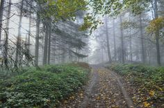 Magical forest - Pinned by Mak Khalaf Autumn hike in the magical forest near Pepelari a mountain near Zenica Bosnia and Herzegovina Nature autumnbeautifulforestlightmagictrees by ninomujkic