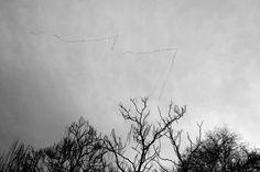http://elpulpo.com.br/pb/compra/are-you-listening-2/ ARE YOU LISTENING? Este postal faz parte do trabalho da fotógrafa catalã Ana Benavent, uma artista que desenvolve sua obra entre o celular e câmeras analógicas, buscando sempre desvelar nossas sensações a partir do banal que é o cotidiano.