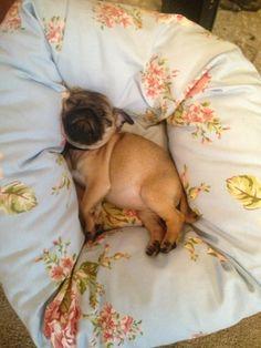 sleepy puppy | Tumblr