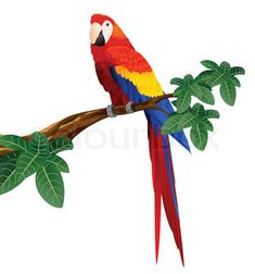Detailed macaw bird vector