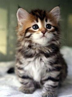 Recopilación de los gatitos más tiernos y graciosos | Cuidar de tu gato es facilisimo.com