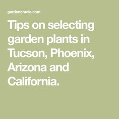 Tips On Selecting Garden Plants In Tucson Phoenix Arizona And California