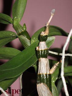 Orchids, Garden, Plants, Gardens, Garten, Lawn And Garden, Plant, Gardening, Outdoor