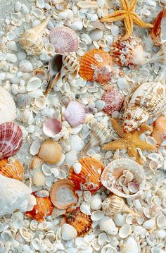 How I would love to explore a beach with Sea shells like this... a veritable blanket of them