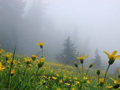[Inspiração pela manhã #29] manhãs perfeitas, BLOG #manhãsperfeitasblog #perfectmornings