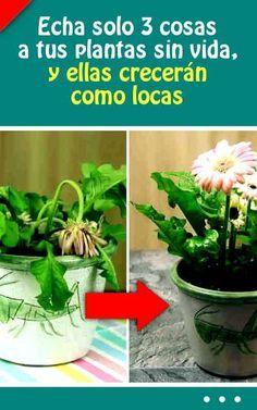 Echa solo 3 cosas a tus plantas sin vida, y ellas crecerán como locas #plantas #revivir #fertilizante #abono #interiors #flores #florezcan